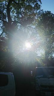 馬橋神社の光.JPG
